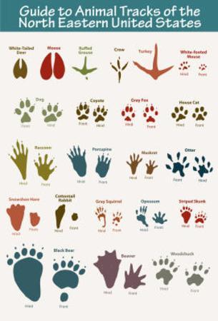 North Eastern Animal Tracks Art Poster Print