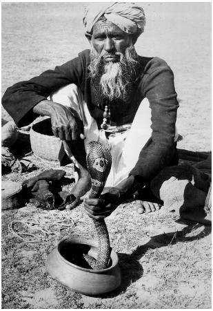 Snake Charmer and Cobra 1957 Archival Photo Poster