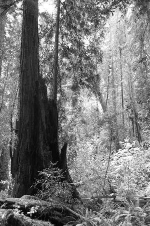 Tree Path II