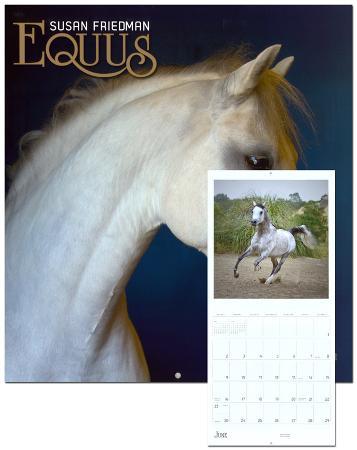 Equus: Susan Friedman - 2013 Wall Calendar