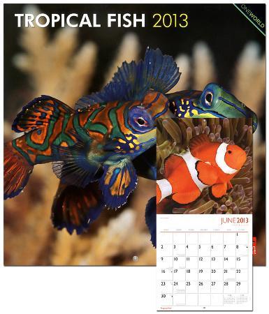 Tropical Fish - 2013 Wall Calendar