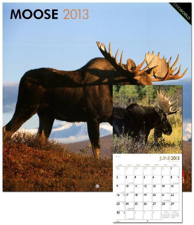 Moose - 2013 Wall Calendar
