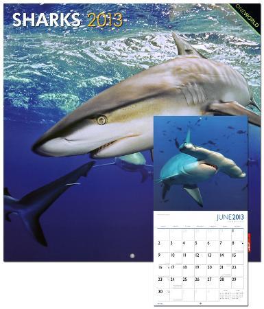 Sharks - 2013 Wall Calendar