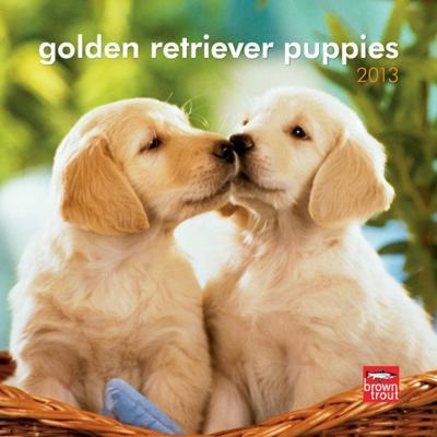Golden Retriever Puppies - 2013 Mini Calendar