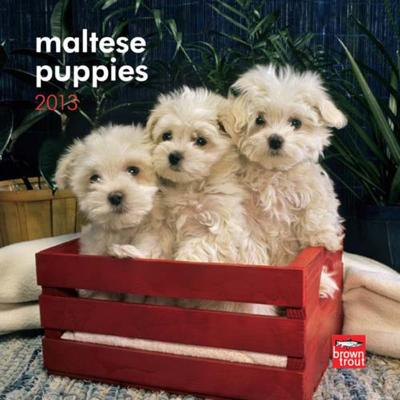 Maltese Puppies - 2013 Mini Calendar