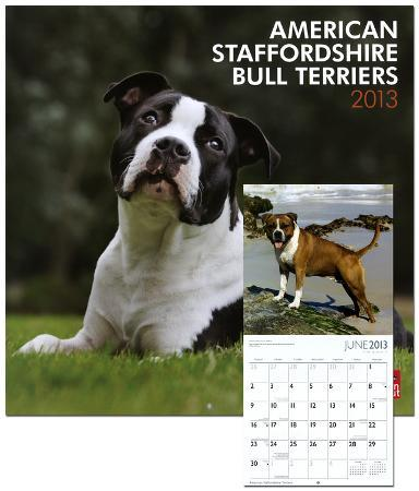 American Staffordshire Terriers - 2013 Wall Calendar