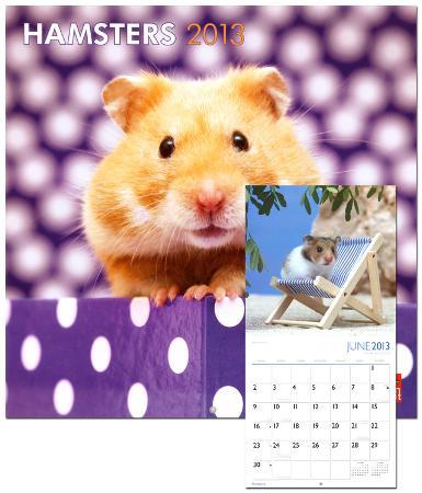 Hamsters - 2013 Wall Calendar