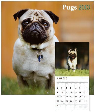Pugs - 2013 Wall Calendar