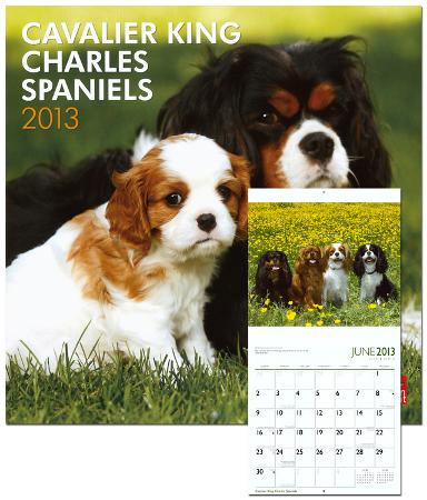 Cavalier King Charles Spaniels - 2013 Wall Calendar