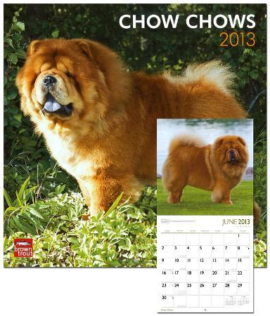 Chow Chows - 2013 Wall Calendar