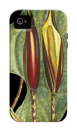 Tropical Plant on Black IV