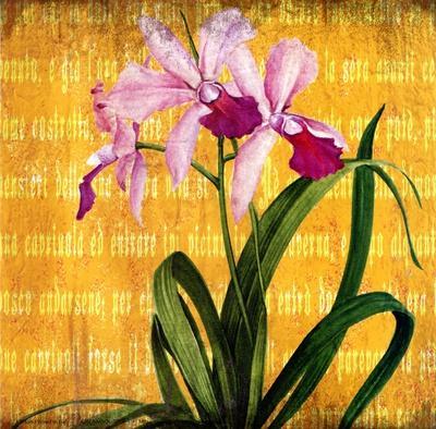 Orchids IV