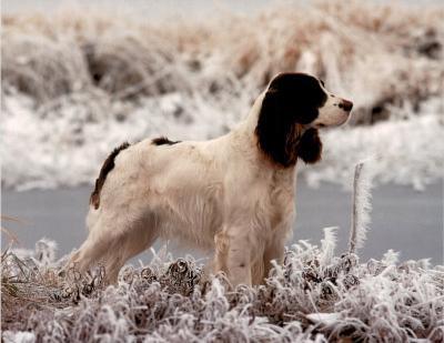 Springer (In Snow)