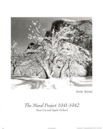 Snow covered orchard Ansel Adams