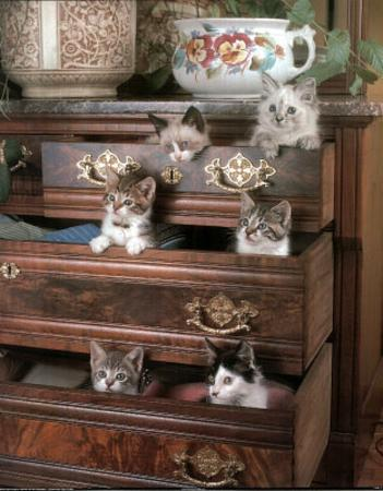 Kittens in Drawers (Pets)