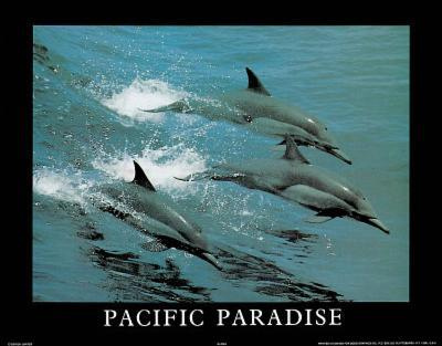 Pacific Paradise 3 Dolphins Art Photo