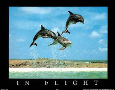 In Flight Dolphins Art Photo