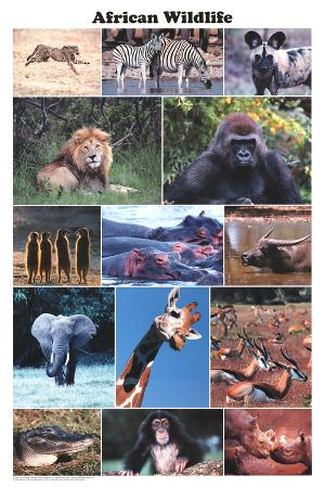 Laminated African Wildlife Educational Animal Chart Poster