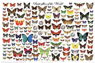 Laminated Butterflies of the World Educational Science Chart Poster