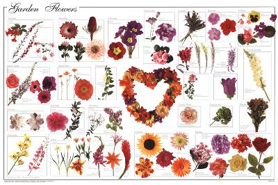 Laminated Garden Flowers Educational Science Chart Poster