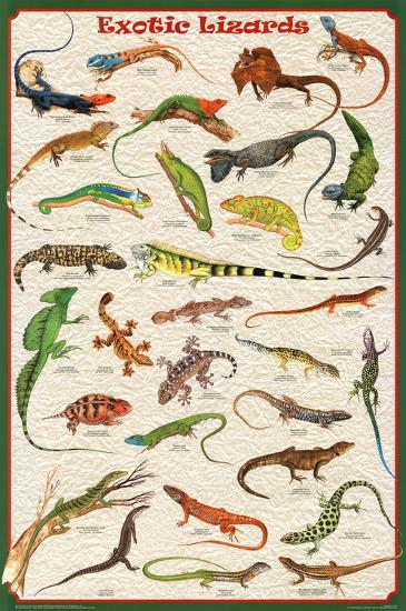 Exotic Lizards Reptiles Educational Science Chart Poster ...