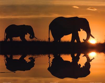 Jim Zuckerman African Silhouette Art Print Poster