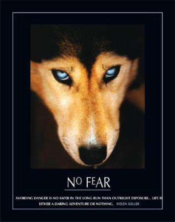 No Fear Hellen Keller Quote Dog Art Print Poster