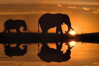 Jim Zuckerman African Silhouette Elephants Art Print Poster