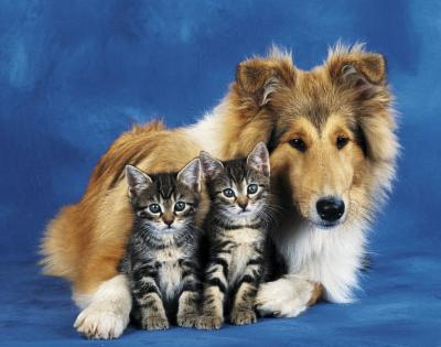 Friends Forever (Dog & Cats) Art Poster Print
