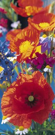 Red Poppies Giant Door Poster Art Print