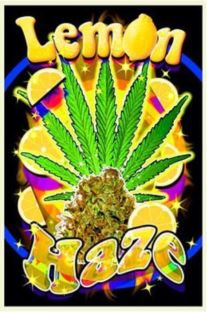Lemon Haze Pot Marijuana Blacklight Poster Print