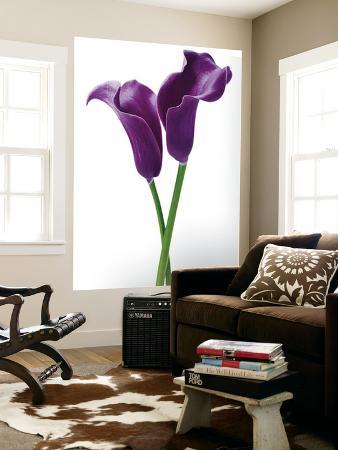 Innes Ivor Purple Callas Flower Mural