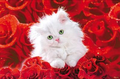 White Cat (Red Roses) Art Poster Print