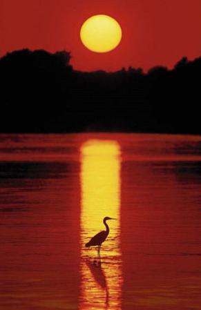 Hank Gans (Sunset in the Florida Keys) Art Poster Print