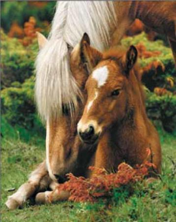 Mare and Foal (Brown Horses) Art Poster Print