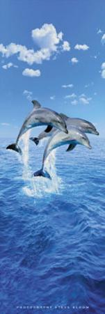 Steve Bloom (Three Dolphins, Door) Art Poster Print