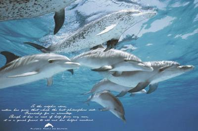 Dolphins (Friends of Man) Art Poster Print