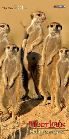 Meerkats - 2013 Slim Décor Calendar