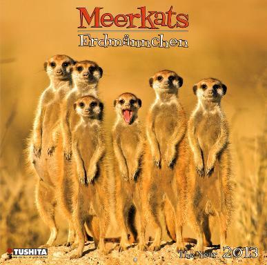 Meerkats - 2013 Wall Calendar
