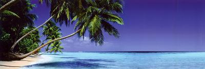 Beach-Paradise Lost