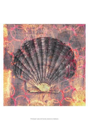Seashell-Scallop