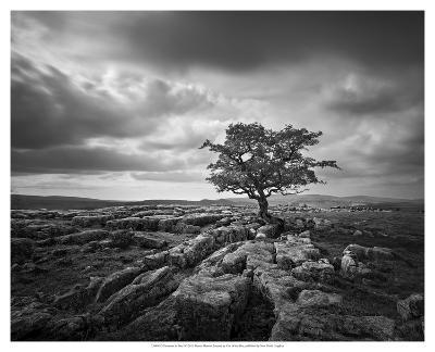 Pavement & Tree I