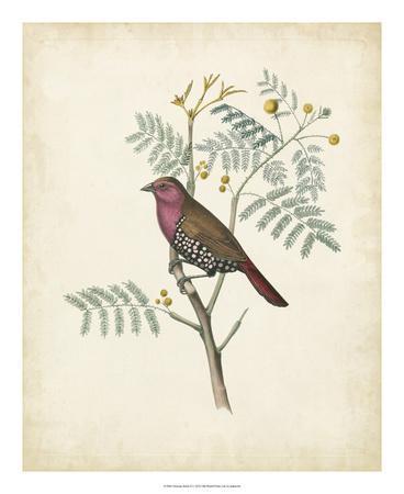 Delicate Birds II