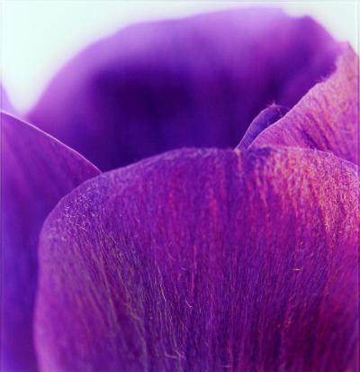 Violets I