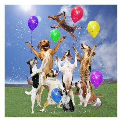 Dogs partying