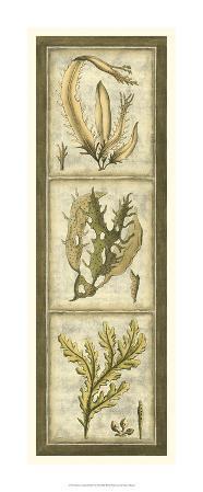 Exotic Seaweed Panel I