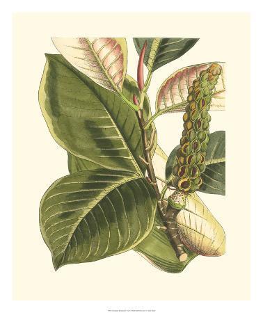 Fantastical Botanical IV