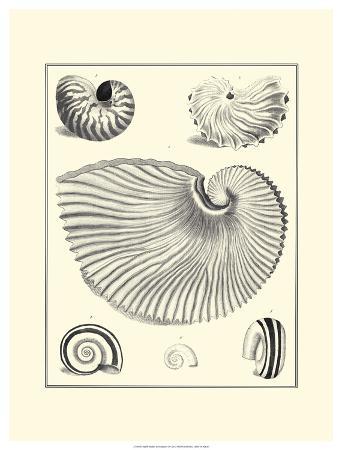 Studies in Symmetry II
