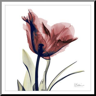 Single Tulip in Red