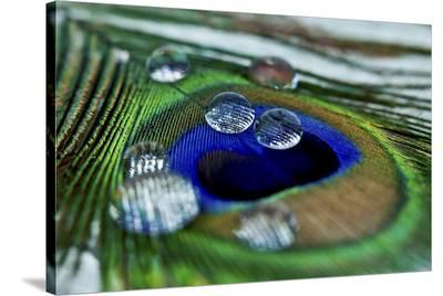Peacock Feather Drops